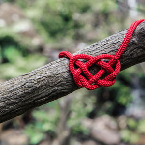 Heart Knot on Tree Branch