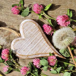 Wooden Heart, Clover Flowers, & Dandelion