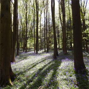 Ostara Spring Nature Walk