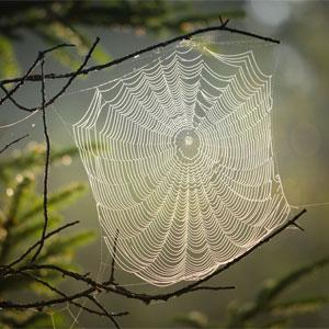 Samhain Symbol - Spider Web