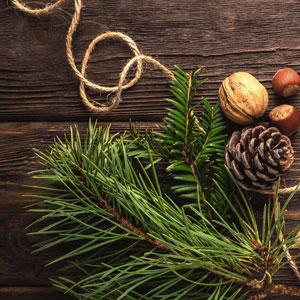 Yule Pine