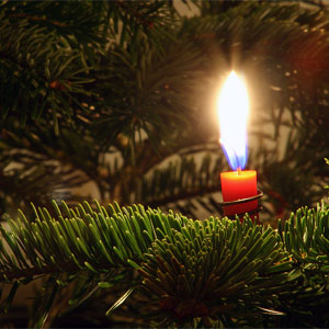 Candle in a Spruce Tree